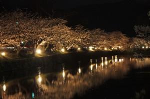 松本城夜桜見物バス運行します